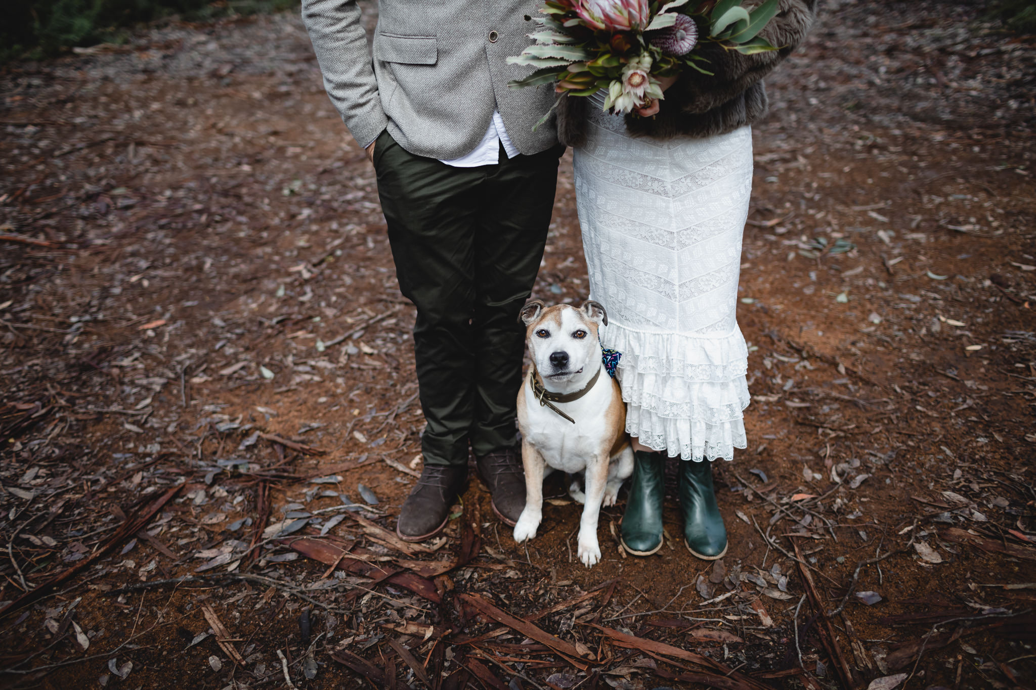 Old Staffordshire terrier dog standing between bride and groom at quirky forest elopement