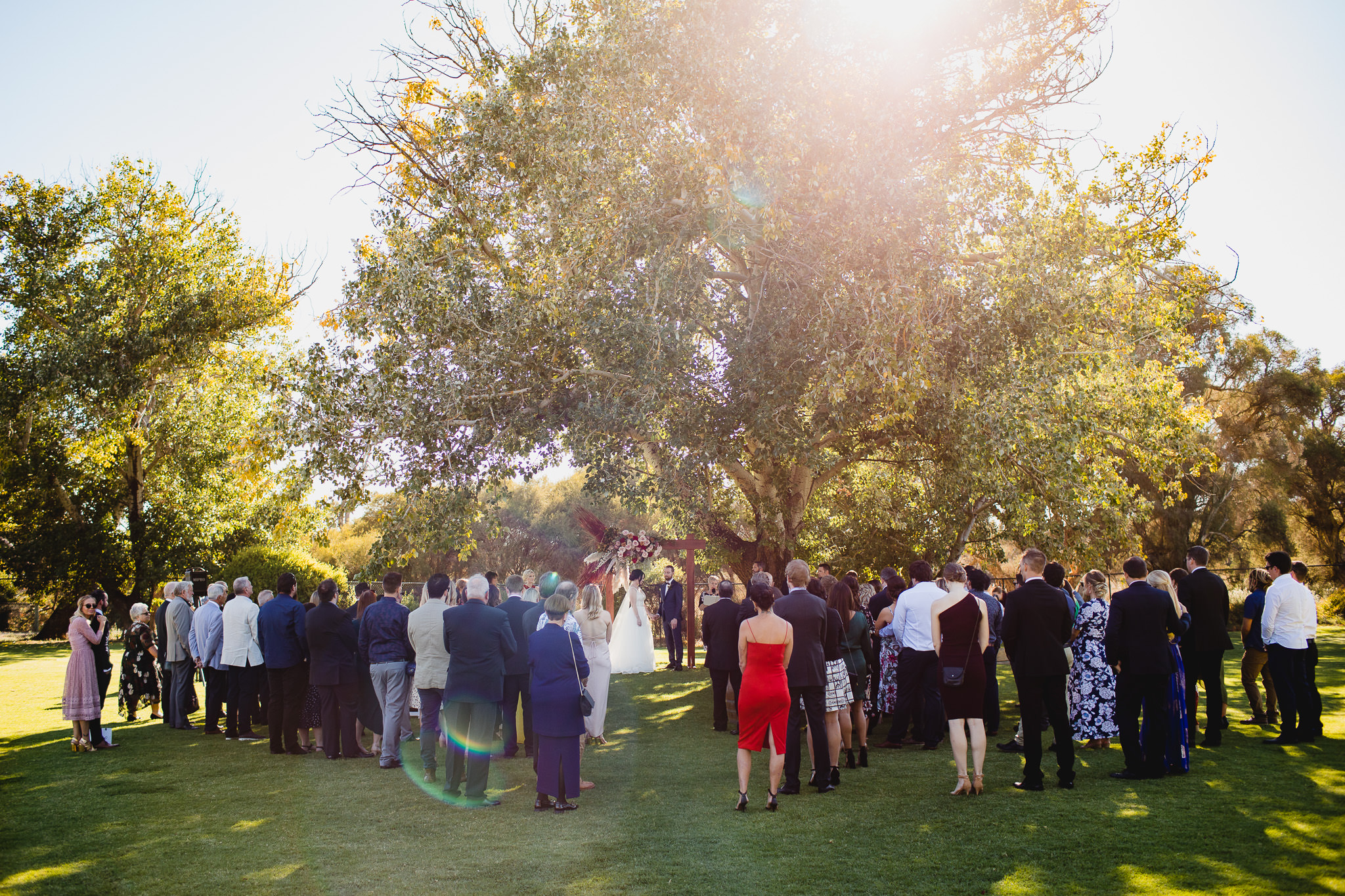 backlit photo of colourful wedding ceremony under poplar tree at Old Broadwater Farm