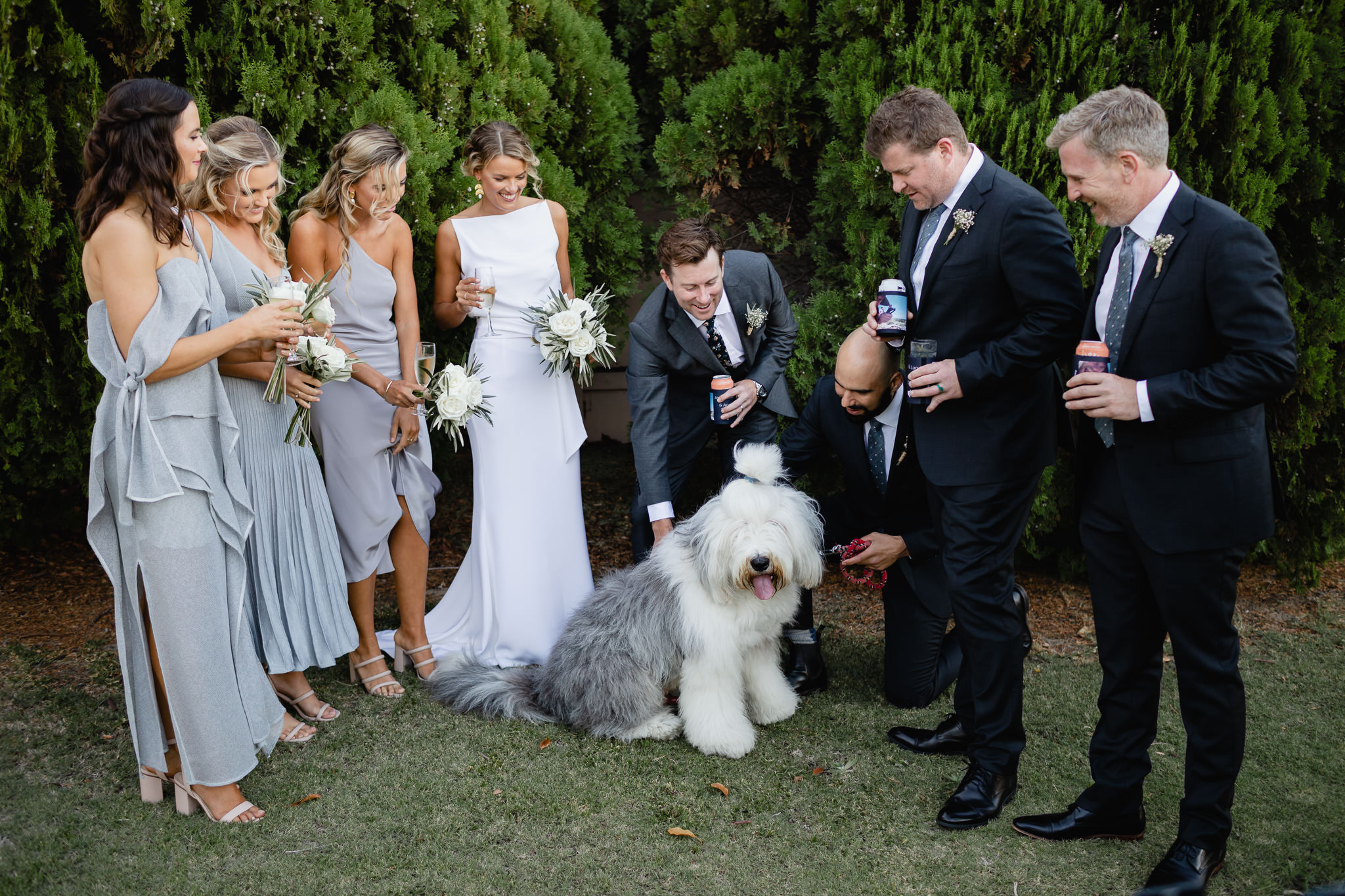 Smiling and laughing bridal party patting Old English Sheepdog that photobombed their wedding photos