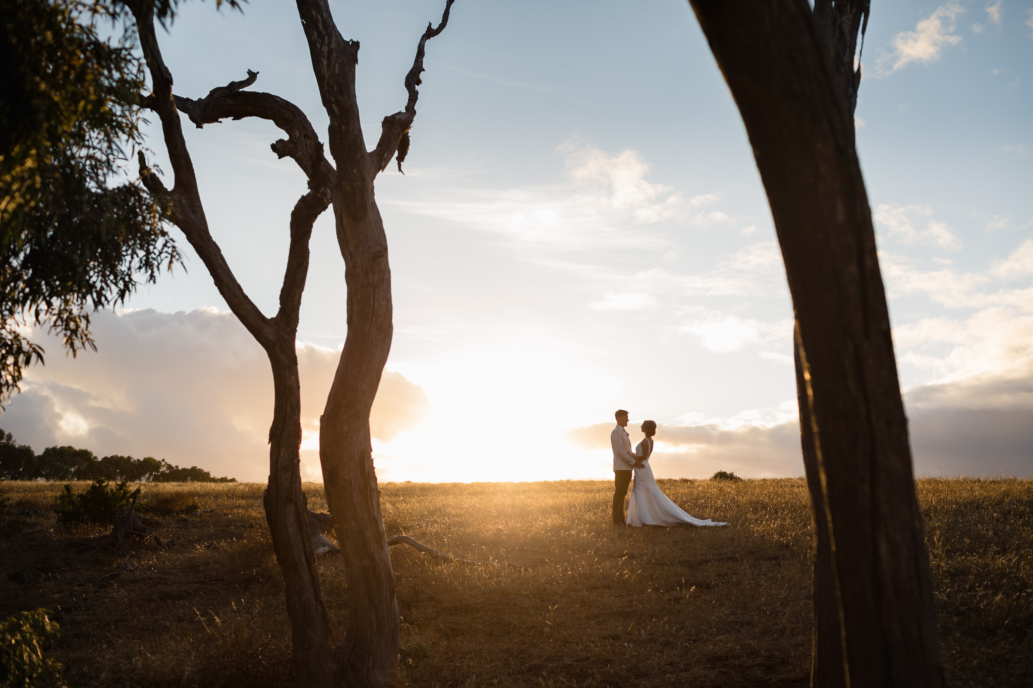 wedding photo of bride and groom in field of golden grass framed between dead trees in Yallingup at sunset